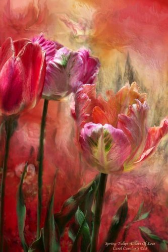 Tulips colors of love