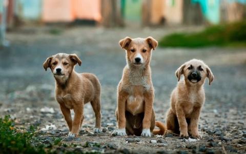 Собаки спасли ребенка, котор…