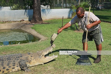 Фермер верхом на крокодиле