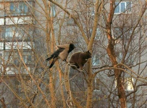 Весна пришла, коты прилетели...))