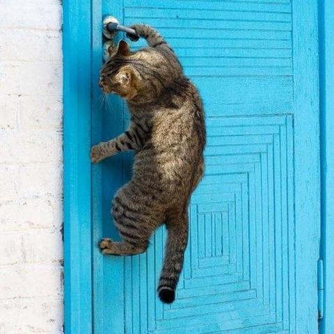 Коты, которые отчаянно хотят…