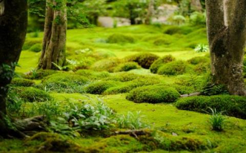 Удивительные почвопокровники и мхи – прекрасная альтернатива газонам