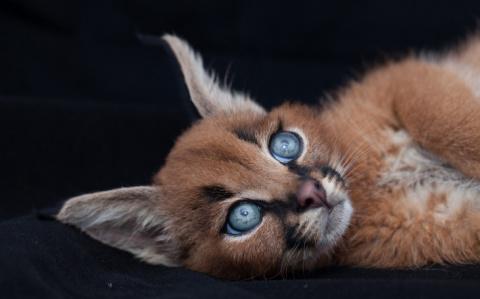 Восхитительная кошка, о кото…