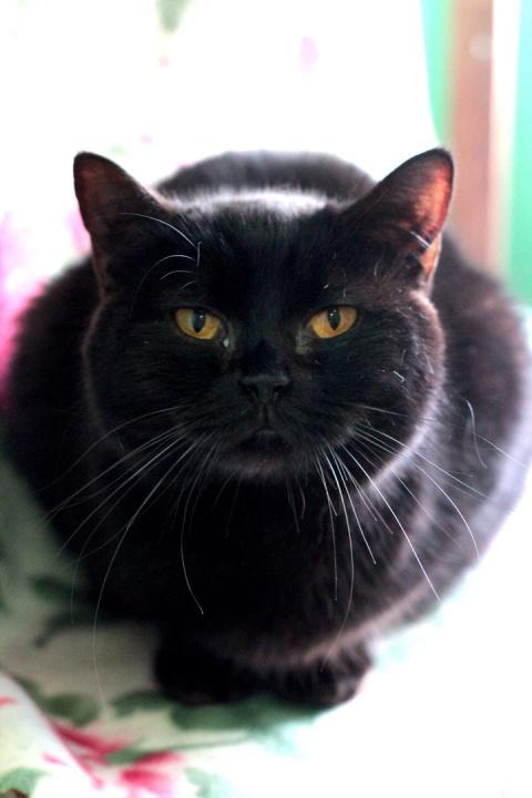 Если вы ценитель породистых кошек, то это для вас!!!