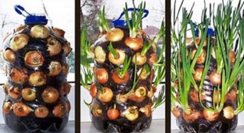 Восхитительный трюк с бутылкой: круглый год с урожаем зеленого лука!