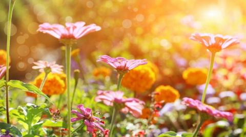Многолетники, цветущие все лето