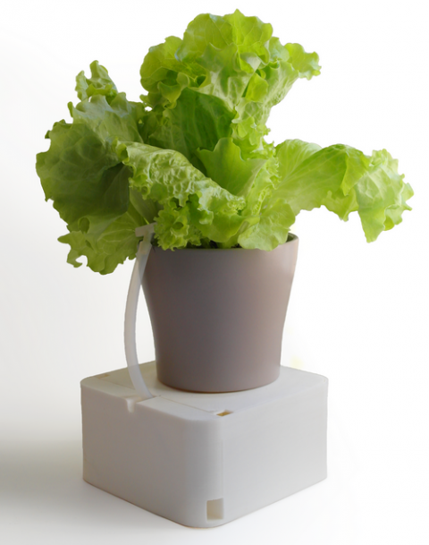 На Кикстартере собирают средства на производство умной поливалки для цветов Aquarius