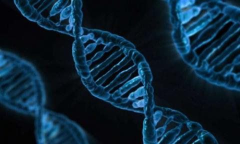 Ученые определили набор гено…