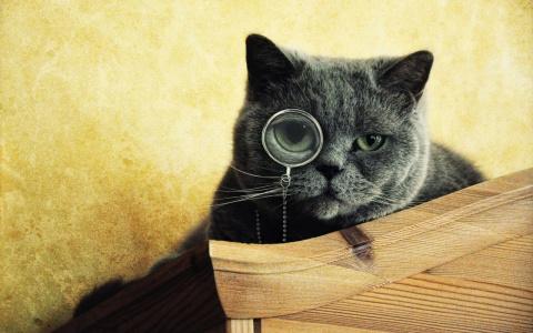 КОШКИН ДОМ. История необычных кошек
