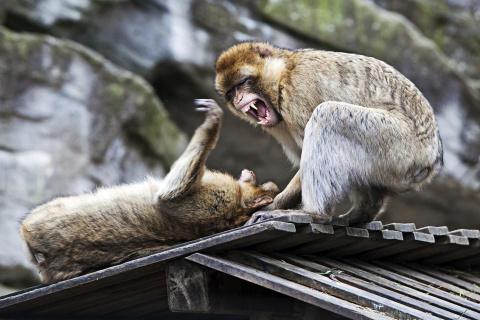 Почему многие животные убивают особей своего вида? (9 фото)