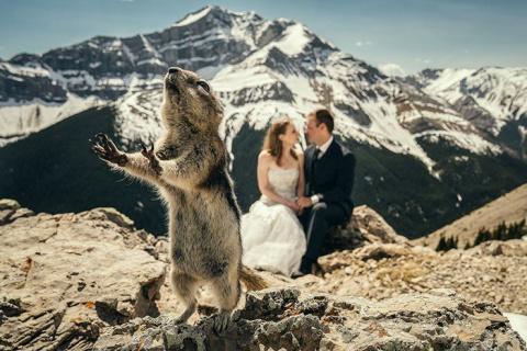 35 лучших свадебных фотобомб