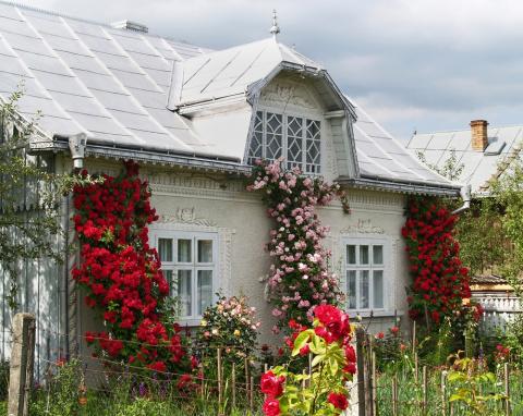 Как продлить цветение растений, маленькие полезные хитрости