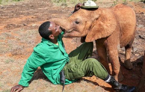 Осиротевшая слониха расцелов…
