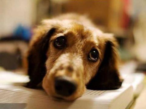 Трогательные собачьи мысли