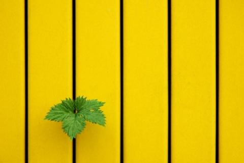Прекрасная простота минимализма