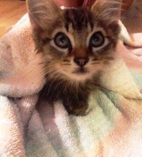 Кот принес домой котенка. Он решил, что эта кроха теперь будет жить с ними!