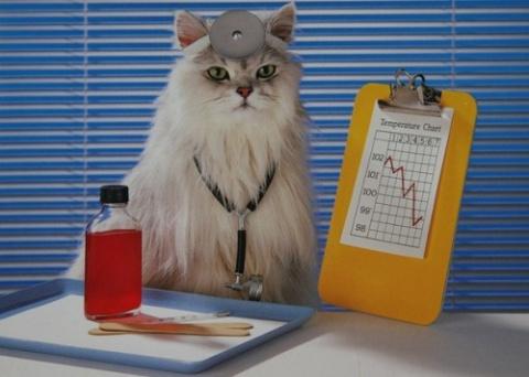 Инструкция по лечению кота)))