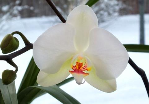 Как поливать орхидею зимой и нужно ли пересаживать