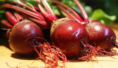 Посев свеклы под зиму: сроки, подготовка грядки и лучшие сорта
