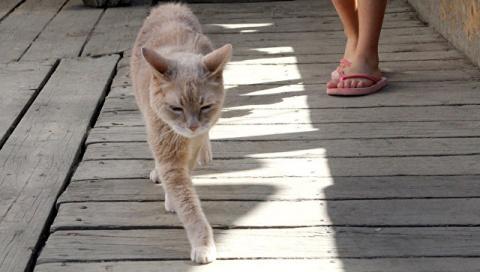На Аляске умер кот, который …