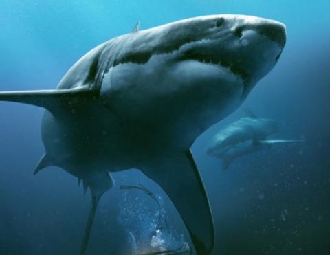 «Синяя бездна»: морские убий…