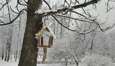 Жителей Карелии просят помочь птицам пережить зиму