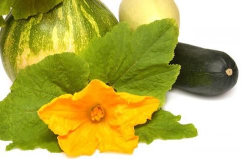 Кабачки, патиссоны, тыквы. Советы по выращиванию в средней полосе России