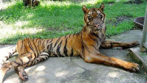 Этот зоопарк - настоящая камера пыток для животных!
