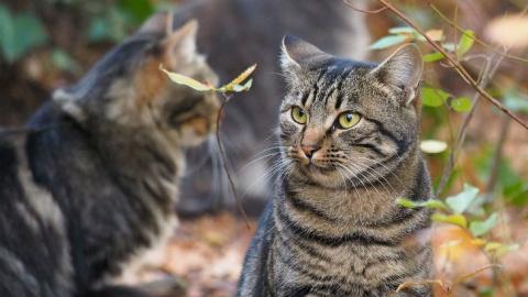 Кот долго обижался, что в до…