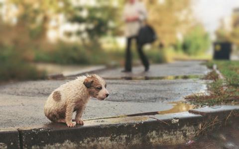 От жизни собачьей… Сегодня -…