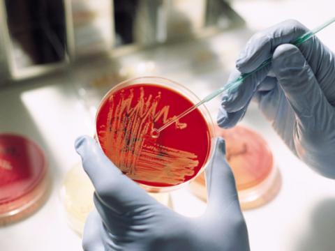 Блогосфера обсуждает эпидемию менингита на Украине