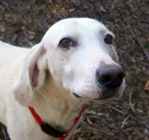 Эта собака 11 раз возвращала…