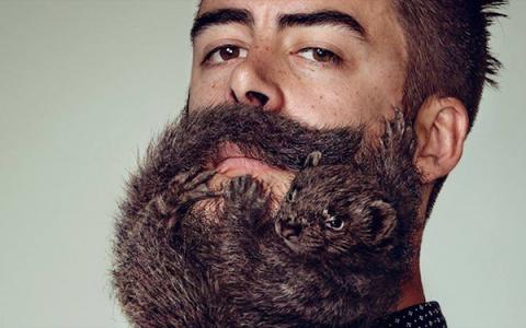 """""""Живая"""" борода - оригинальный маркетинговый ход"""