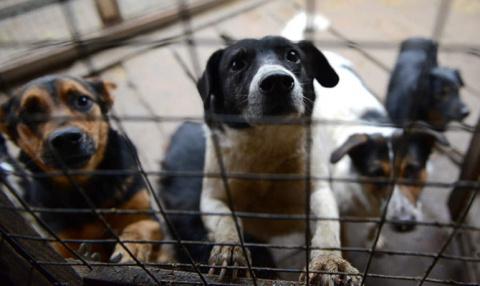 У Кличко выделили 200 миллионов на защиту бродячих животных