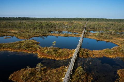 Жизнь эстонских болот: чёрная вода, мостки и биотуалет с опилками