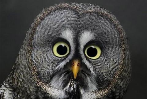 Фотографии удивлённых животных