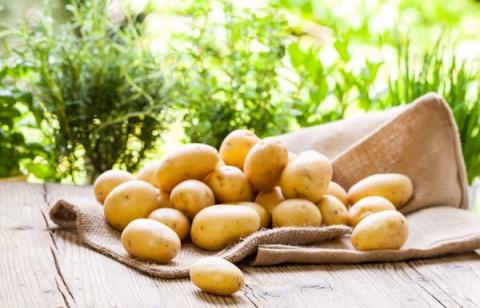 Болезни картофеля: время осматривать клубни