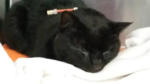 Черный кот лежал на обочине …