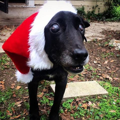 Под Рождество ослепшего и не…