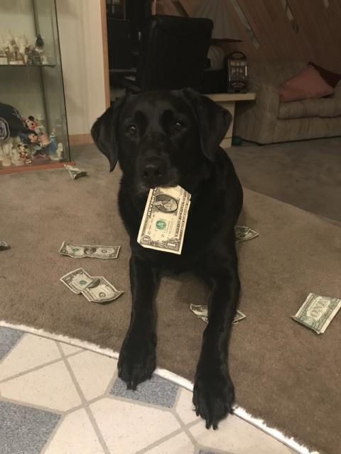 Еще щенком она научилась цен…