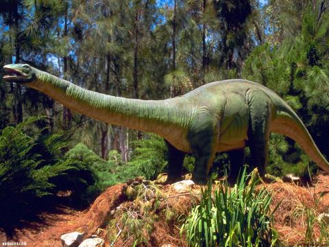 Бронтозавры не вымерли?