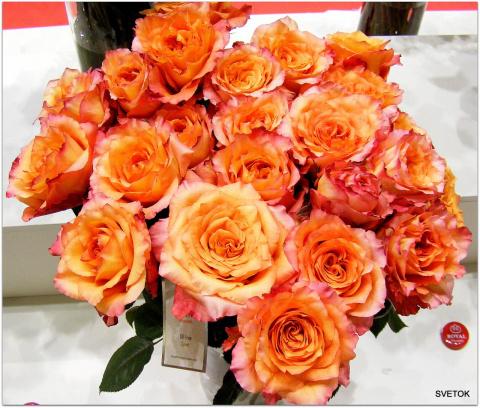 Розы с выставки
