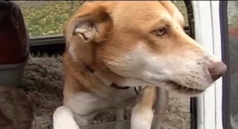 Бездомный пёс поселился в ст…