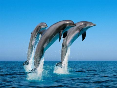 25 курьёзных фактов о дельфи…