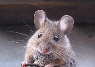 Притча Благородная мышка