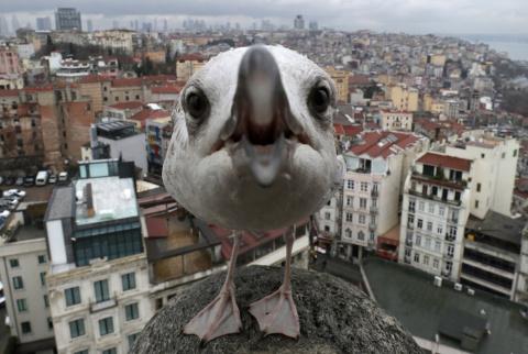Мир животных во взгляде фотокамеры
