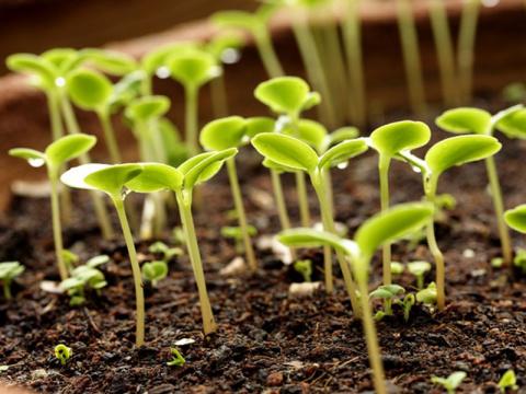 Оригинальный способ выращивания рассады