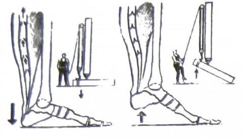 Гимнастика для пяток