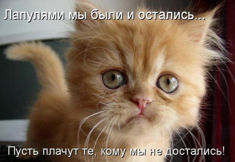Позитивные кошачьи фотки