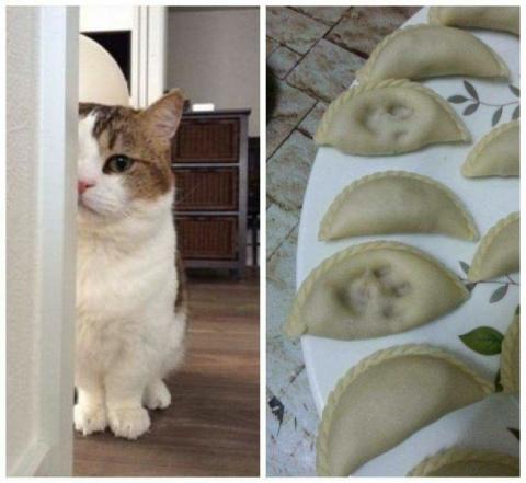 20 потрясающих котов, которы…
